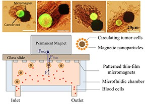 Immunomagnetic Assay On-a-Chip Detects And Analyzes Circulating Tumor Cells