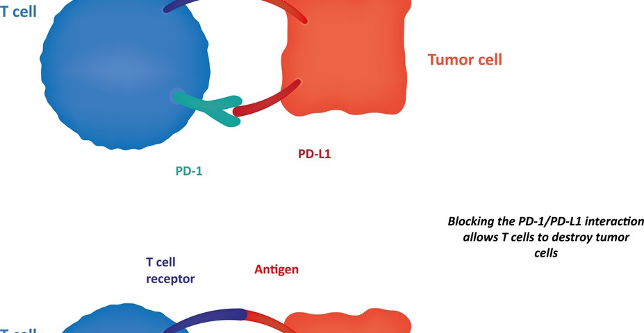 Tumor-fighting Gene Also Regulates Immune Response to Cancer